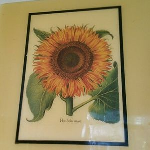 A Picture Of A Sunflower By Flor Solismajor